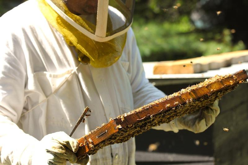 api flex emballages r utilisables en cire d 39 abeille api flex. Black Bedroom Furniture Sets. Home Design Ideas